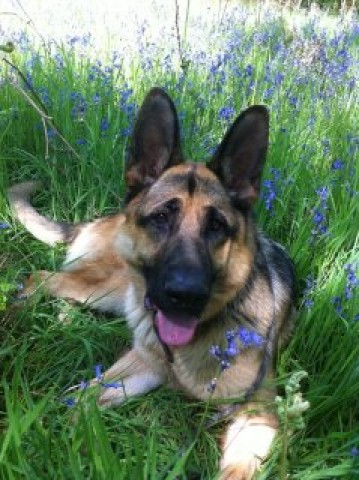 Dog Training Nuneaton
