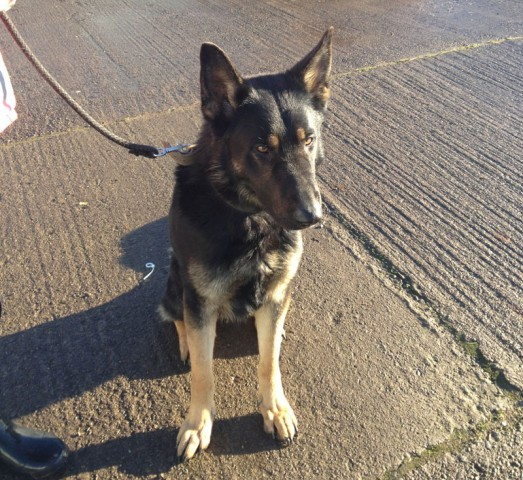 Rescue Retired Police Dogs Uk