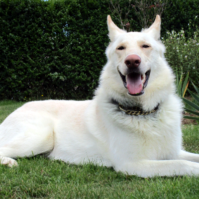 Dog Rehoming Northamptonshire Uk