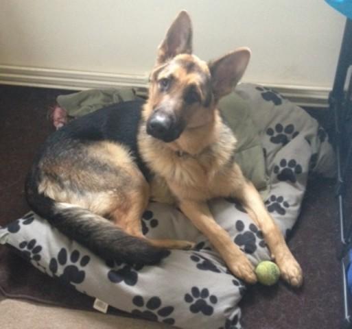 Rescue Dog Redhill