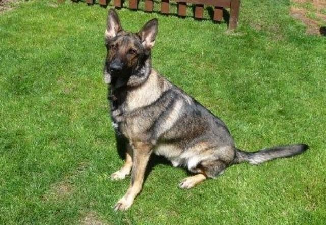 Dog Rescue Kennels West Midlands