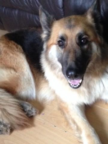 Dog Rescue Lincs Uk