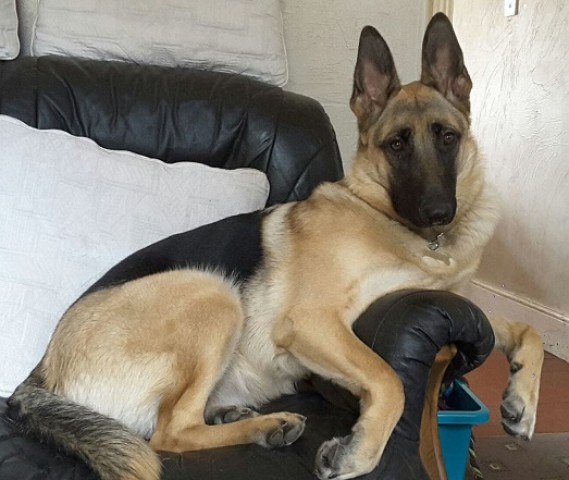 Derbyshire Dog Rescue And Rehoming