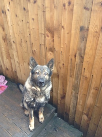 Rehome Dogs Derby Uk