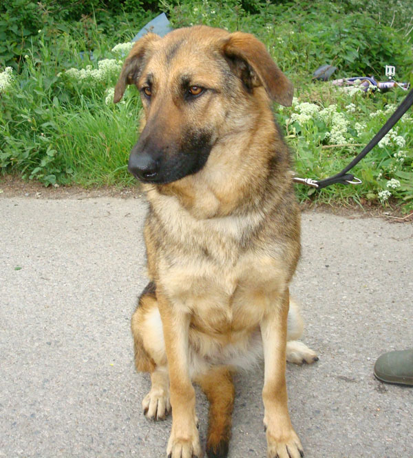 romanian dog Anda who suffered at the hands of humans