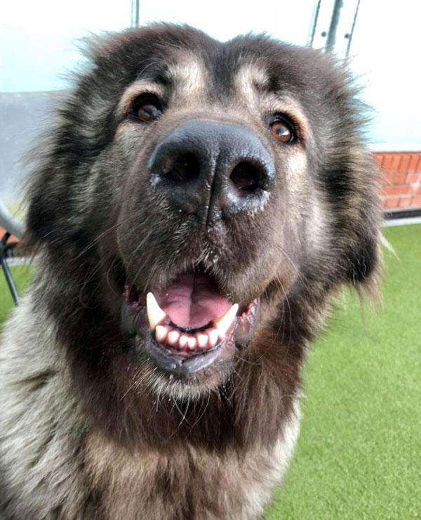 картинки злые собаки волкодавы задача отбойников защитить