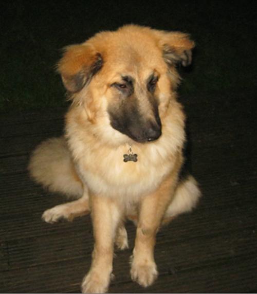South West Uk Dog Rescue
