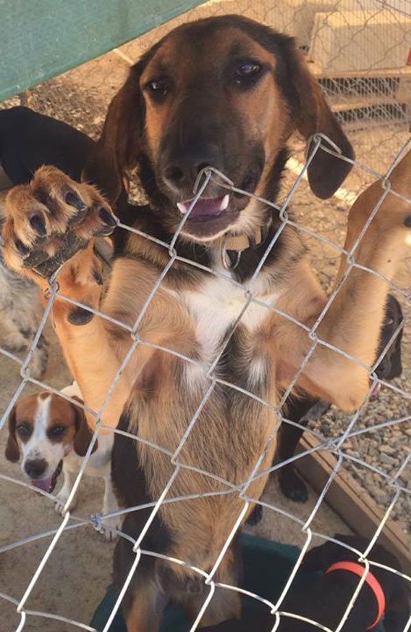 Jodie S Cyprus Dogs Rehoming