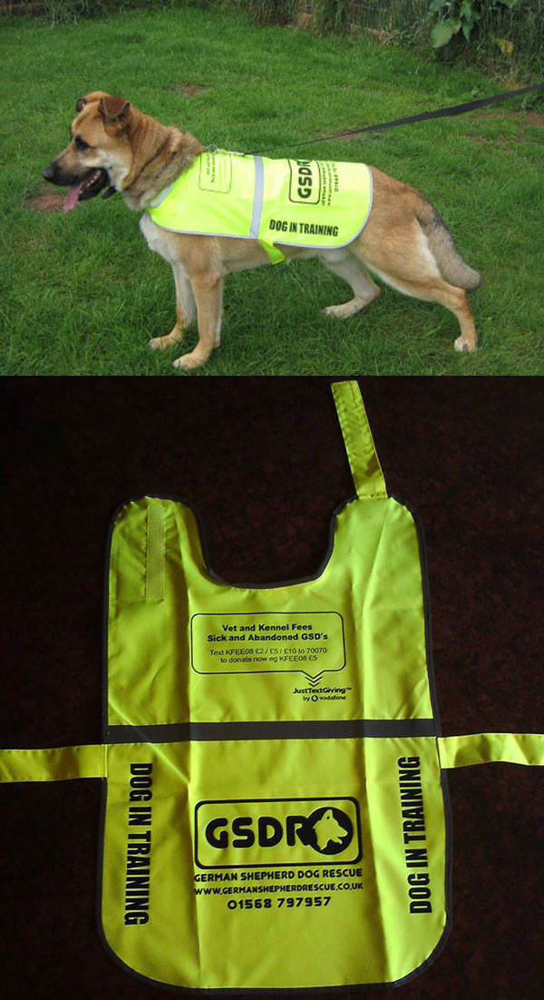 High Viz Dog Coat