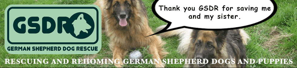URGENT! German Shepherd Dog Cauta in Bristol @ GERMAN SHEPHERD DOG RESCUE (GSDR)
