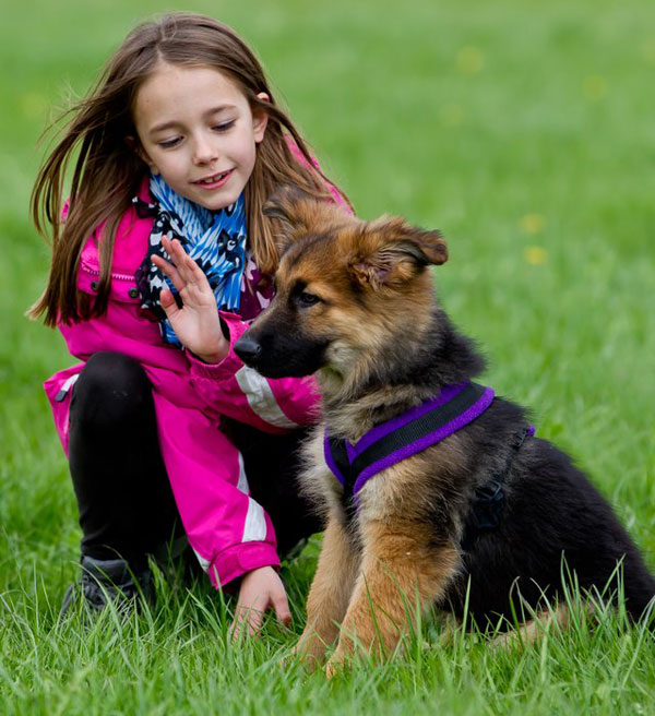 young girl with german shepherd puppy