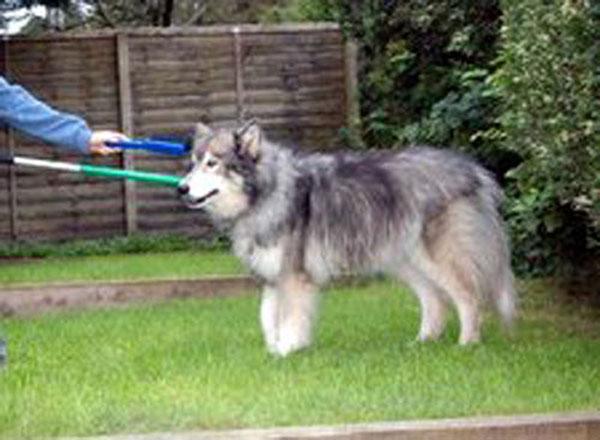 dog on a grasper