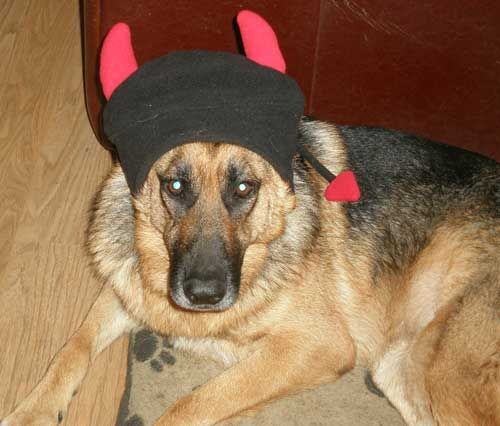 alfie wearing his devils horns