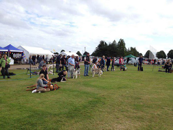 dog owners assembling for the dog show