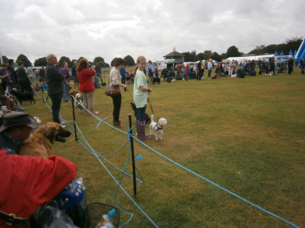 more handlers showing their dogs