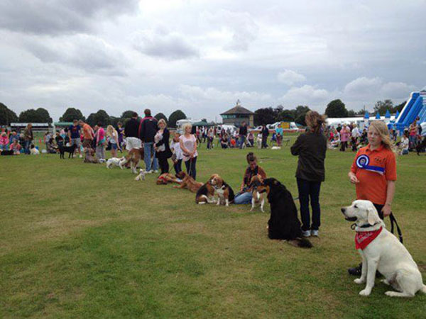 dogs and owners waiting patiently