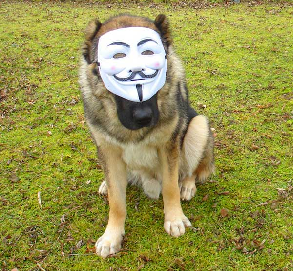 caucasian shepherd saber wearing an anonymous mask