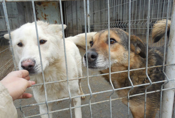 2 dogs imprisoned in the pound