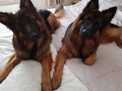 Blaise and Yogi now adopted