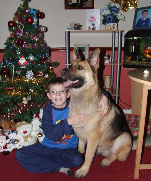 broxy the gsd enjoying xmas