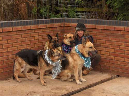 dogs wearing tinsel