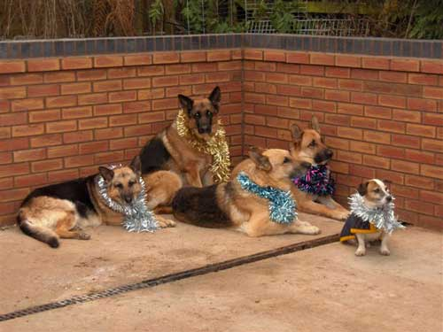dogs with tinsel collars