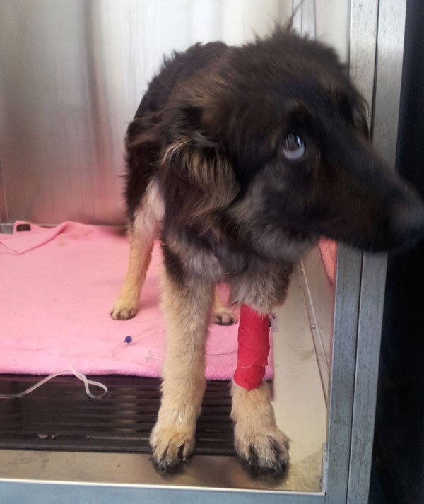 coc the gsd in intensive care