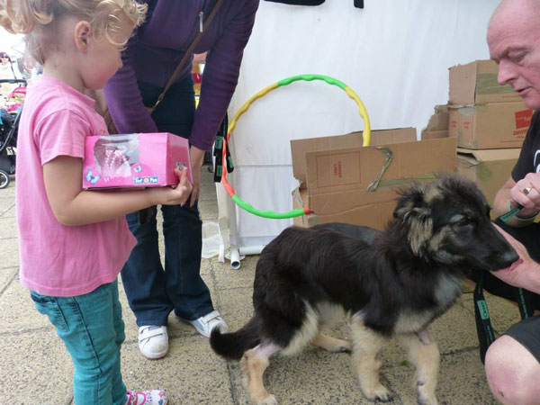 coco gsd puppy meets another little princess