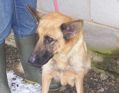 hariet young gsd in the pound