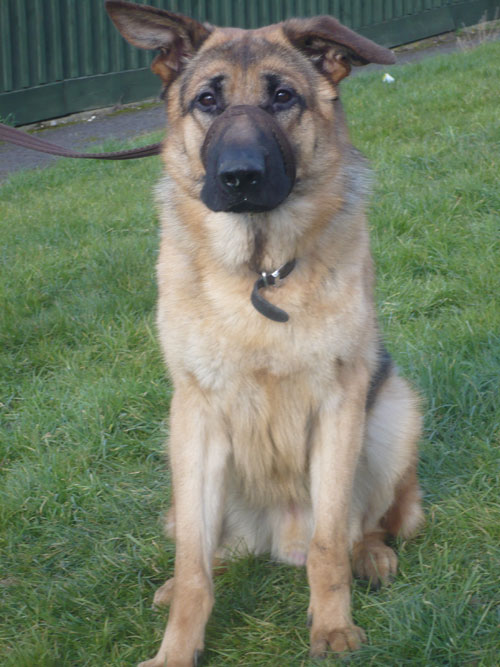 harvey young gsd