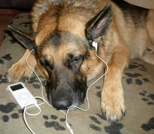the i dog listening to his i pod
