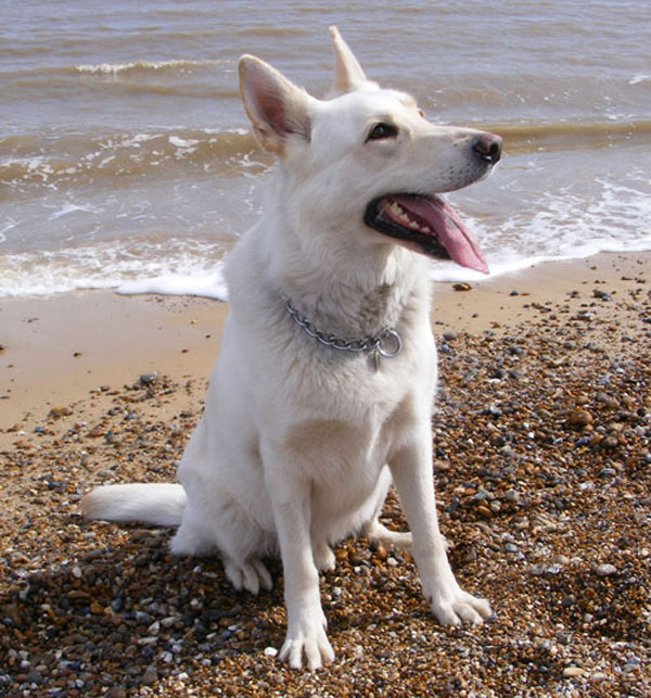Ice the white gsd in the sea