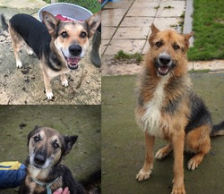 Dogs Overlooked In Kennels