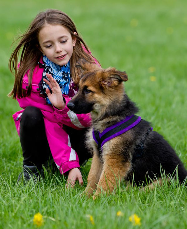 young girl teaching a puppy to sit
