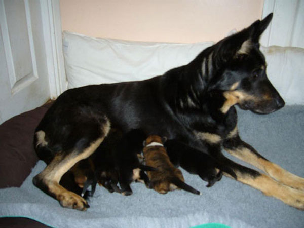 lottie star mum to her puppies