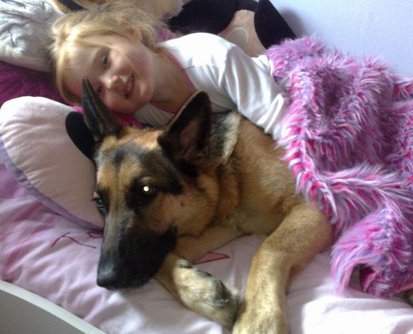 German Shepherd Dog Rescue The Best Gsd Advice