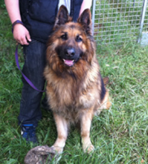 rebel gsd needs a home