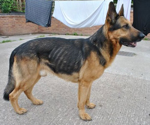 sabre very thin gsd