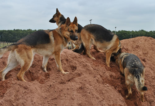 sha the gsd in the sandpit