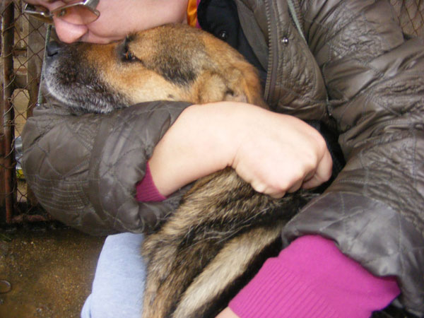 smiley gsd cross getting a cuddle of his rescuer