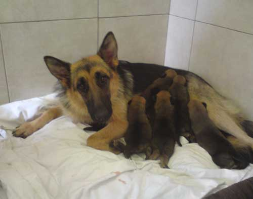 tyra with her puppies