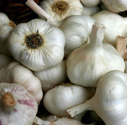 benefits of garlic in dogs