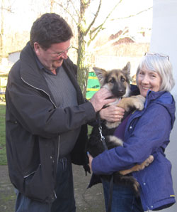 snoozy suzie the rescue german shepherd puppy has peft for her new home