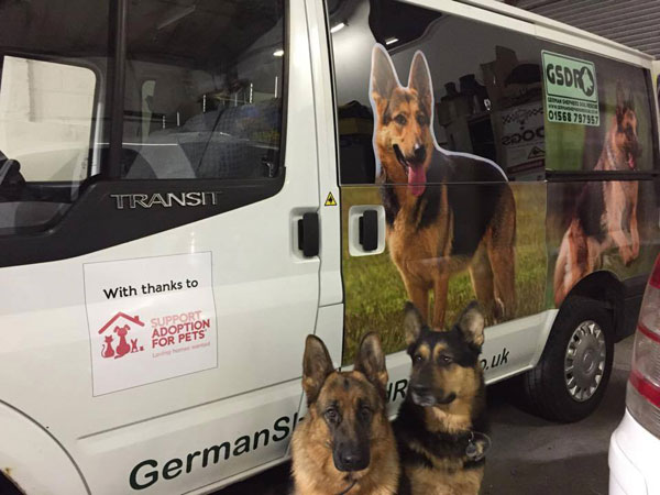great pictures of german shepherds on the van