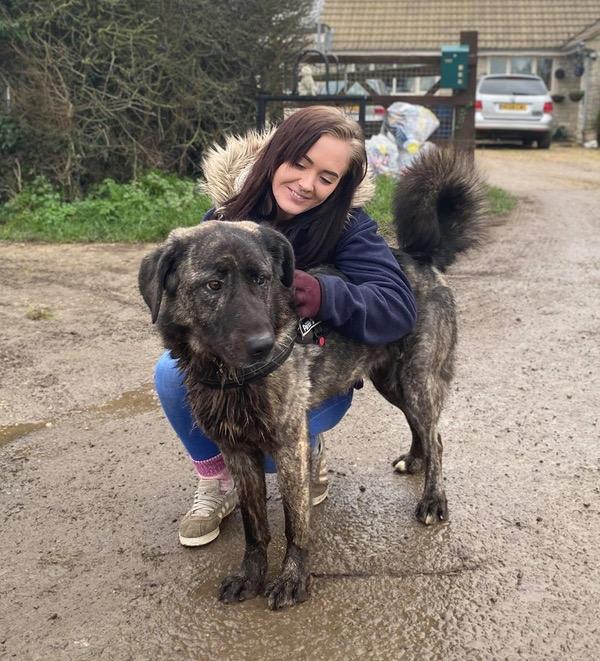 beautiful big dog Brooke needs a new home