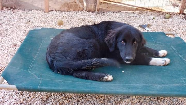 Mable young pup in Greece needs a home