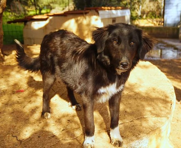 Sweet puppy Mable looking for her forever home