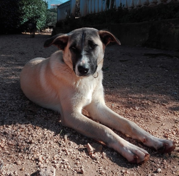 Sweet puppy Mark looking for a forever home