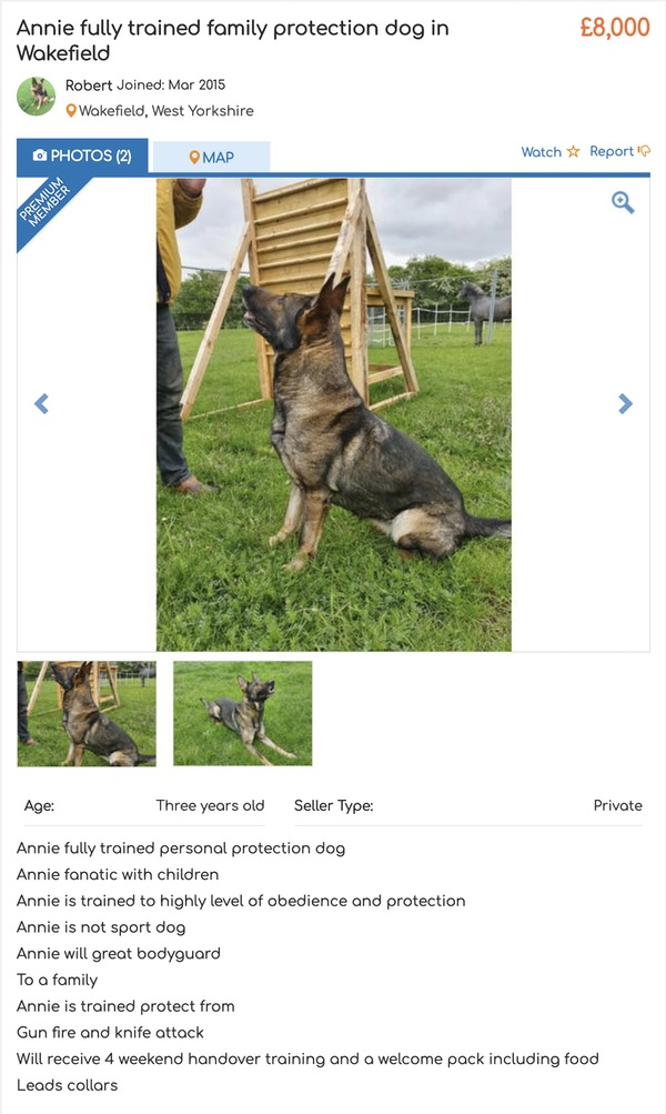 personal protection dog advert