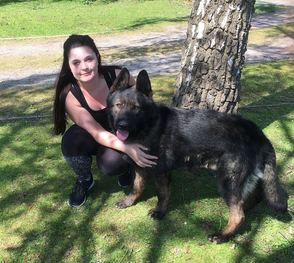 GSD from Czech working lines needs a home